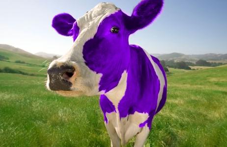 vache violette